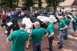 Welche Kuh eignet sich am besten für die Zucht? © LWK NDS Wolfgang Ehrecke