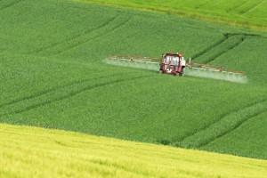Pflanzenschutz im Getreide, © getreidekonservieren.de