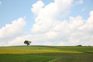 Agrarlandschaft, © getreidekonservieren.de