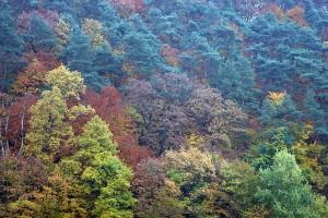 Herbstwald, © getreidekonservieren.de