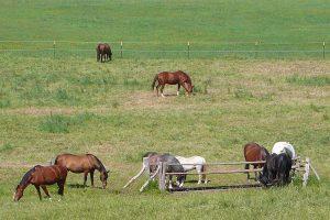 Pferdekoppel, © getreidekonservieren.de