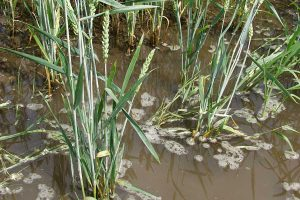 Getreide unter Wasser, © getreidekonservieren.de
