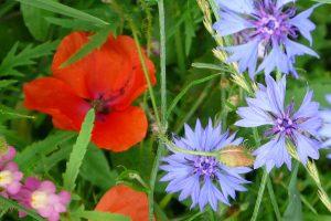 Feldblumen, © getreidekonservieren.de
