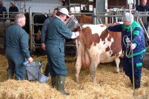 tierärztliche Behandlung, © getreidekonservieren.de