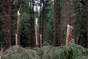 Sturmschäden im Wald, © getreidekonservieren.de