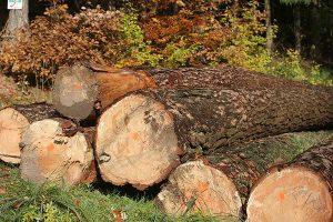 Baumstämme, © getreidekonservieren.de