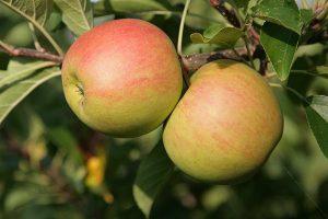 Äpfel, © getreidekonservieren.de