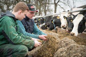 Grüne Berufe sind nach wie vor gefragt: Viele junge Leute auch ohne landwirtschaftlichen Hintergrund sind an einer Ausbildung zum Beispiel auf einem Milchviehbetrieb interessiert, © LWK Niedersachsen / Ehrecke