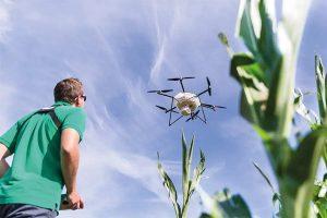 Drohne im Einsatz im Feld: Zielobjekt ist der Maiszünsler, der im Maisanbau jedes Jahr rund 4 Prozent der weltweiten Maisernte vernichtet – 41 Millionen Tonnen, © BayWa