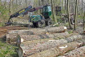 Forstarbeiten, © getreidekonservieren.de