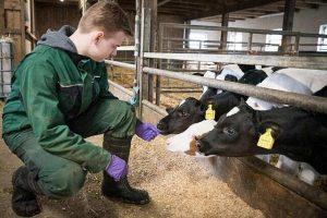 Grüne Berufe sind nach wie vor gefragt: Viele junge Leute sind an einer Ausbildung zum Beispiel auf einem Milchviehbetrieb (Foto) interessiert, © Wolfgang Ehrecke