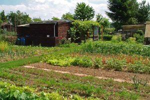 Gemüsegarten, © getreidekonservieren.de
