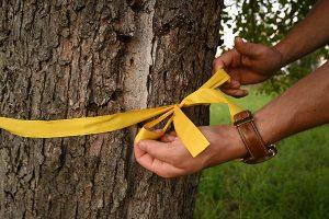 Das gelbe Band an Obstbäumen signalisiert, dass dort für den Eigenbedarf geerntet werden darf, © ZEHN