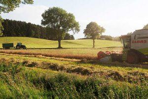 Getreideernte, © BBV