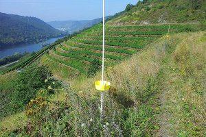 Monitoring-Farbschalen am Rande einer Weinbergbrache bei Pommern/Mosel. Dieser Fallentyp erwies sich im Untersuchungsgebiet als die effizienteste Methode zur Bienenerfassung, © A. Krahner